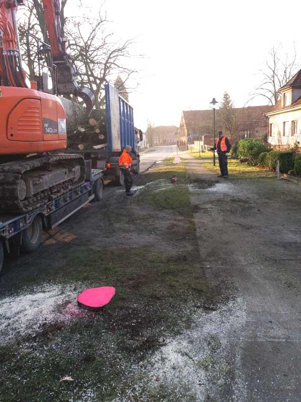 Baumfällungen Bauservice Altmark (2)